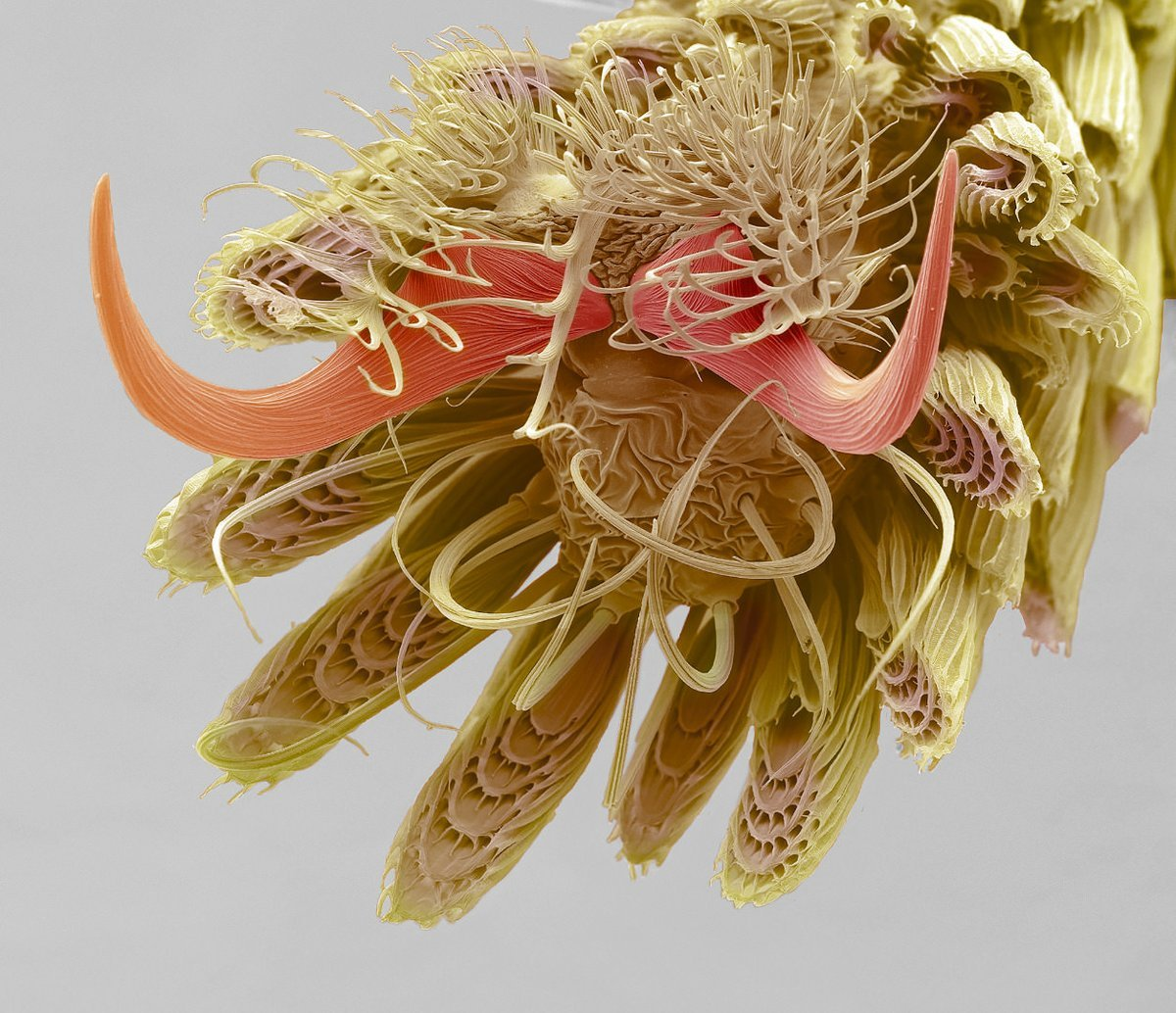A mosquito's foot