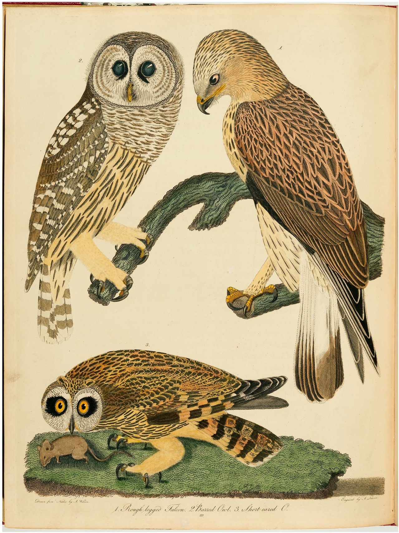 American ornithology or The natural history of the birds of the United States