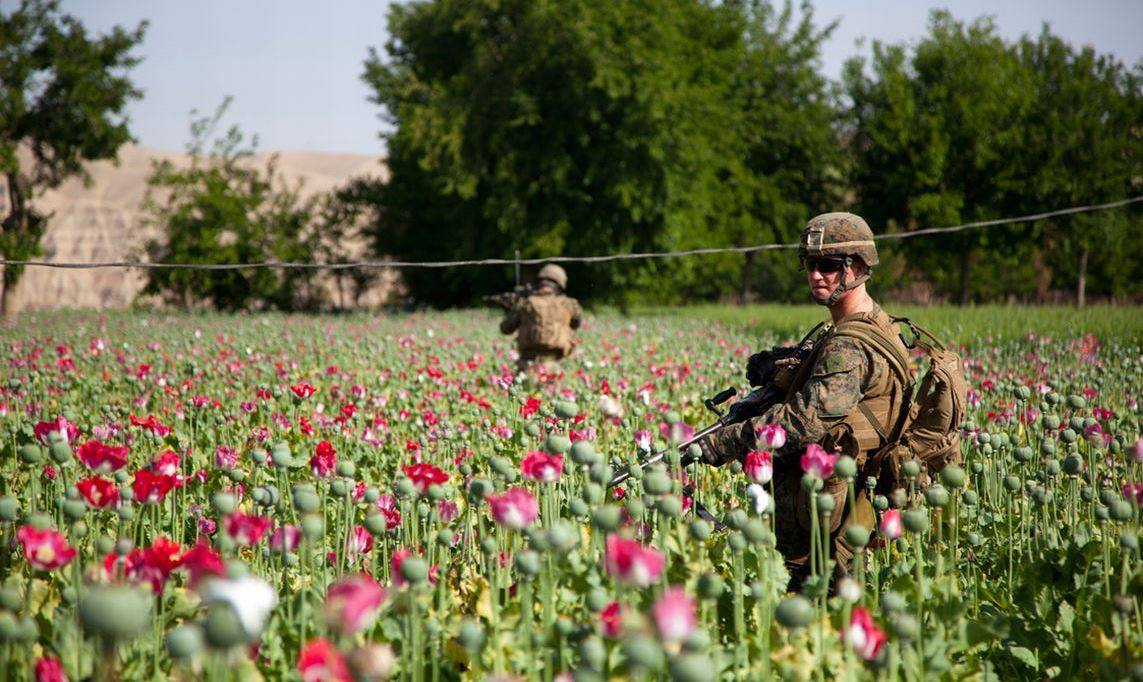 troops guarding poppies