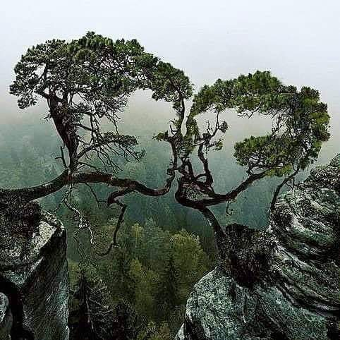 wow natural art