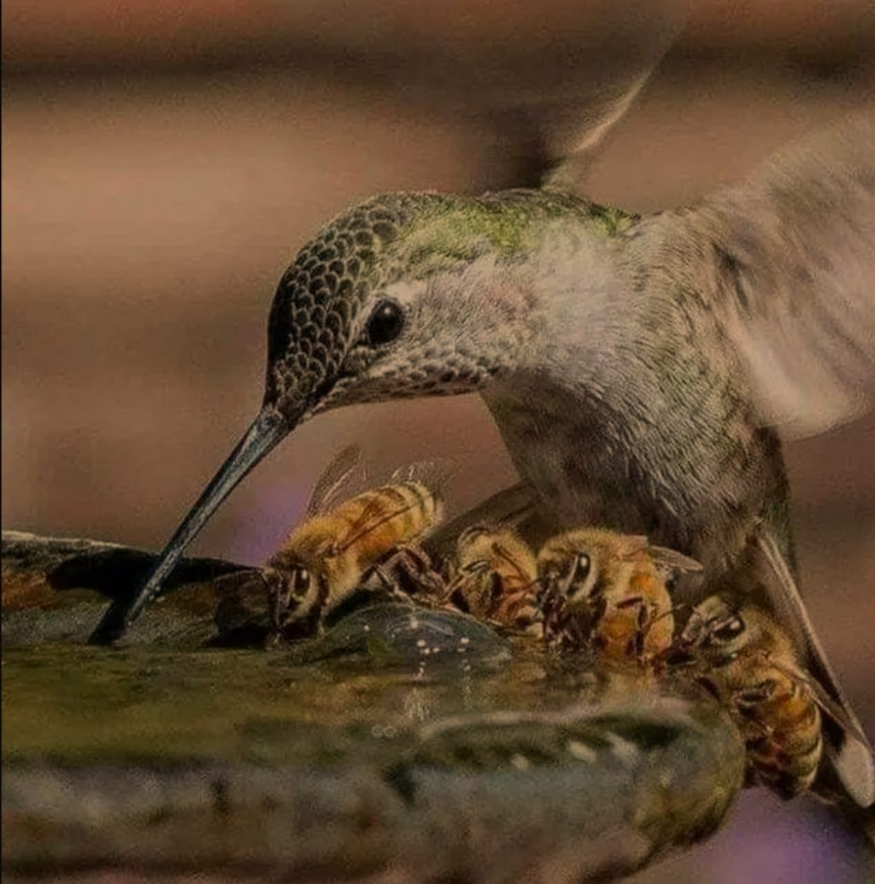 hummingbird with bees