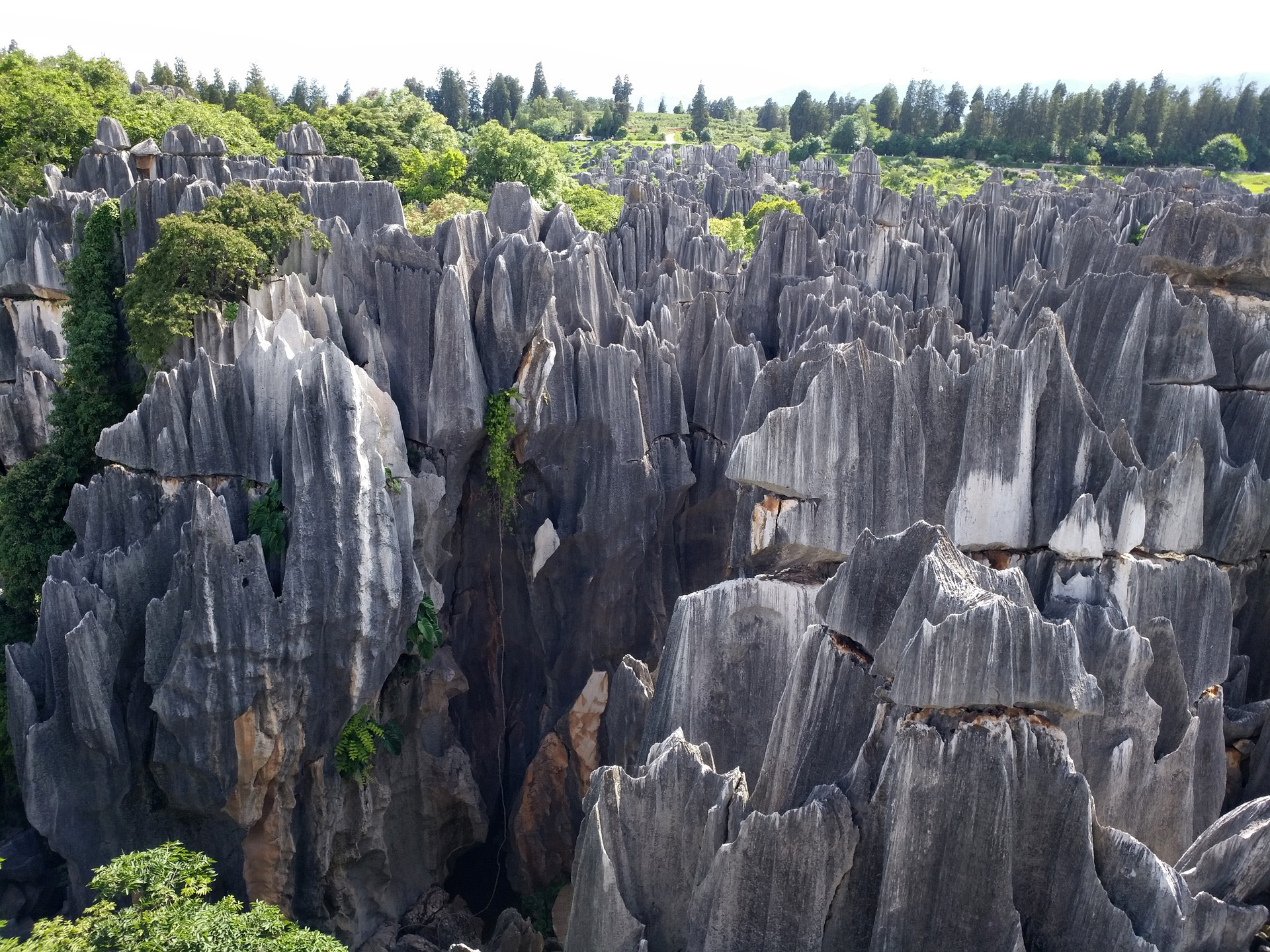 Mysterious Stone Forests