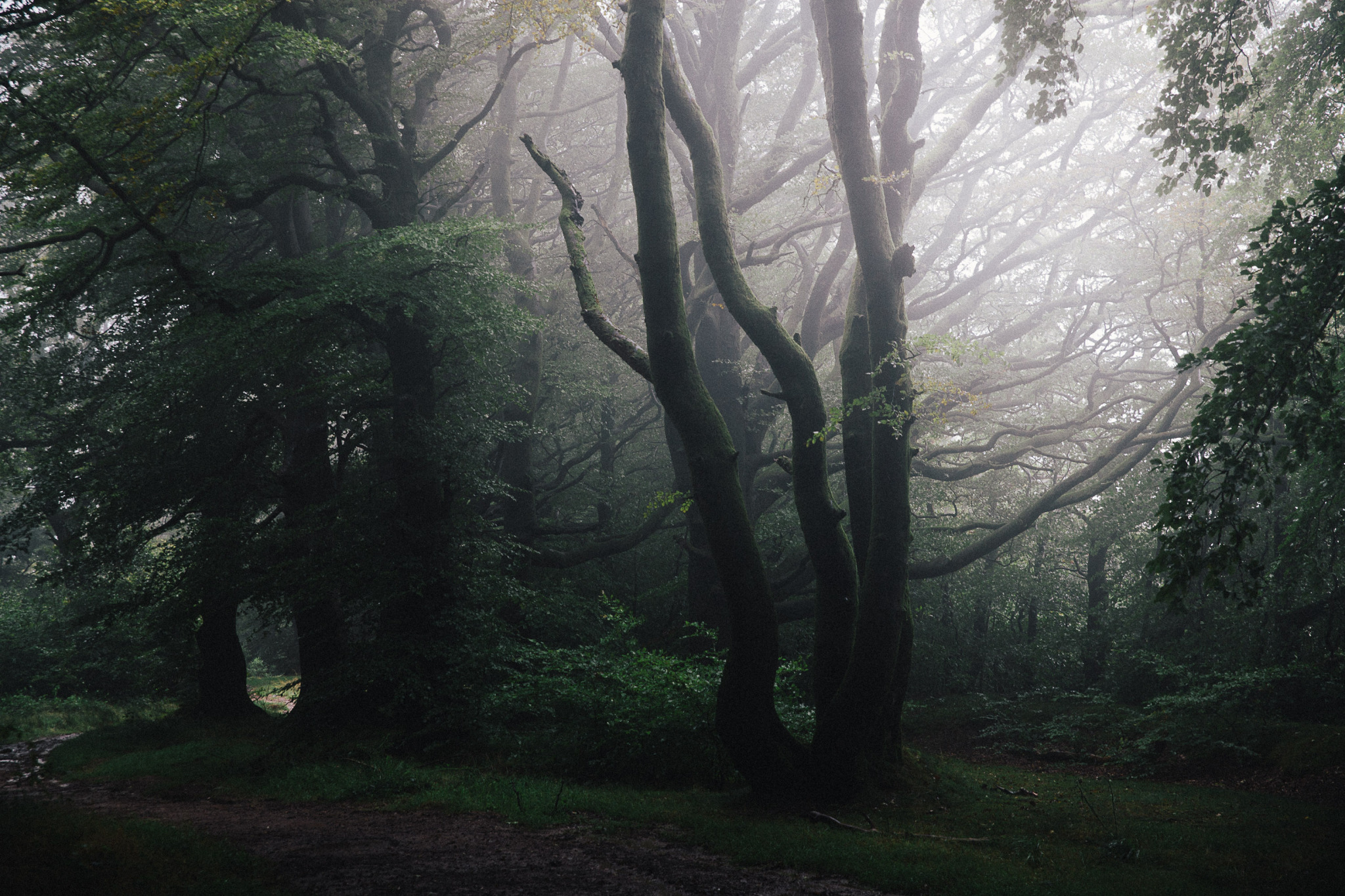 Quantock Forests, Somerset